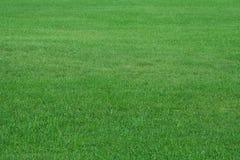 Feld des Sommergrases Stockbilder