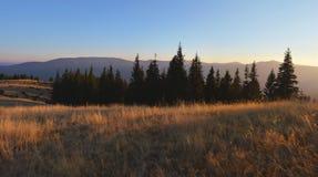 Feld des trockenen wilden Grases und Schattenbilder von Tannenbäumen bei Sonnenuntergang Lizenzfreie Stockfotos