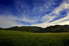 Feld des Weizen-Kornes und der Berge Stockfotografie