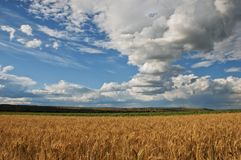 Feld des Weizens Stockfotografie