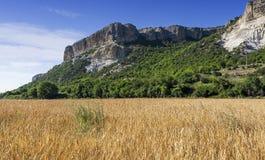 Feld des Weizens mit Gebirgshintergrund Lizenzfreie Stockbilder