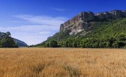 Feld des Weizens mit Gebirgshintergrund Stockfotografie