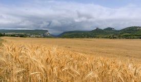 Feld des Weizens mit Gebirgshintergrund Lizenzfreies Stockbild