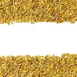 Feld durch ungeschälten Reis und Reissamen auf dem weißen Hintergrund für lokalisiert Lizenzfreie Stockfotografie