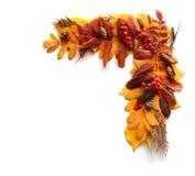 Feld, eine Ecke des Herbstlaubs und Früchte Lizenzfreie Stockfotografie