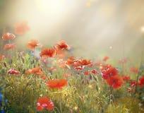 Feld einer blühenden roten Mohnblume stockbild