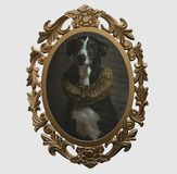 Feld eines Hundes im Renaissancestil lizenzfreie stockfotos
