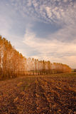 Feld eingefaßt durch Baumzeile Lizenzfreie Stockfotos