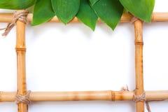 Feld für Abbildungen vom Bambus Stockfoto