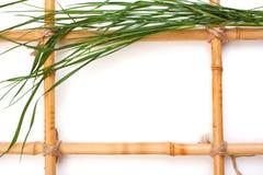 Feld für Abbildungen vom Bambus Lizenzfreies Stockbild