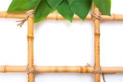 Feld für Abbildungen vom Bambus Stockbild
