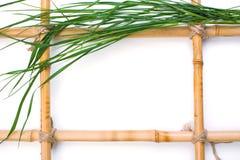 Feld für Abbildungen vom Bambus Stockbilder