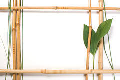 Feld für Abbildungen vom Bambus Stockfotos