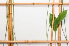 Feld für Abbildungen vom Bambus Lizenzfreie Stockbilder