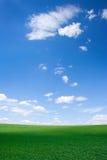 Feld am Frühling lizenzfreie stockbilder