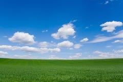 Feld am Frühling lizenzfreies stockfoto