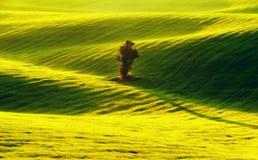 Feld Frühlingsmorgen? Feld des grünen Grases und des blauen bewölkten Himmels ein schöner Sonnenaufgang auf dem Gebiet Stockfotografie
