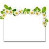 Feld: Gänseblümchen und Grünblätter Lizenzfreies Stockbild