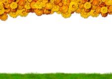 Feld gebildet von den Blumen und vom Gras Stockfotografie