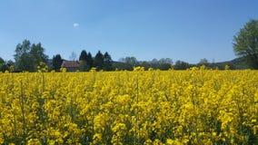Feld-gelbe Himmel-Natur Stockbild