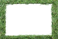Feld gemacht von den Tannennadeln Lizenzfreies Stockfoto