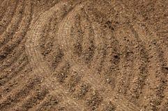 Feld gepflogen, gesäte Getreide stockfoto