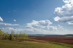 Feld gepflogen, gesäte Getreide lizenzfreie stockbilder
