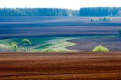 Feld gepflogen, gesäte Getreide stockbilder