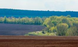 Feld gepflogen, gesäte Getreide stockbild
