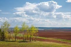 Feld gepflogen, gesäte Getreide lizenzfreie stockfotografie