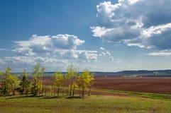 Feld gepflogen, gesäte Getreide stockfotografie