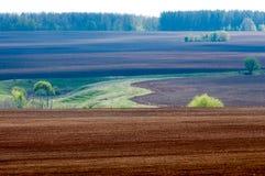 Feld gepflogen, gesäte Getreide stockfotos