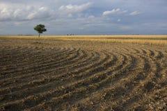 Feld gepflogen nach Weizenernte Stockbilder