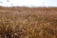 Feld-Gras als die Sonnensätze in der Puglia-Region von Italien lizenzfreie stockfotografie