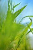 Feld-Gras-Hintergrund Stockfotografie