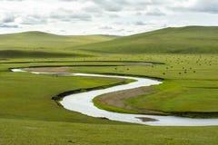 FELD-GRAS-WASSER-STROM-SCHAF-KUH lizenzfreie stockfotos