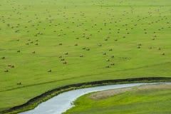 FELD-GRAS-WASSER-STROM-SCHAF-KUH stockbilder