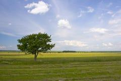 Feld, Himmel, Baum Stockfoto