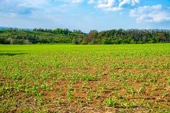Feld im Frühjahr mit Frischgemüse Lizenzfreies Stockfoto