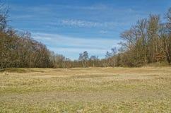Feld im Frühjahr umgeben durch einen Wald stockfotografie