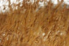 Feld im Früjahr Stockfotografie