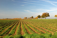 Feld im Herbst Stockbild