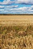 Feld im Herbst Lizenzfreies Stockfoto