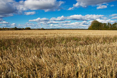 Feld im Herbst Stockfoto