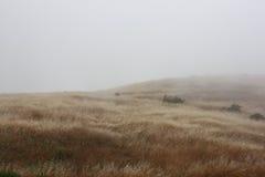 Feld im Nebel Stockfoto
