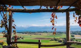 Feld im Rahmen von Weinbergen in der Schweiz Lizenzfreie Stockfotos
