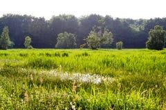 Feld im Sommer stockfotografie