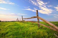 Feld im Sommer Lizenzfreies Stockbild