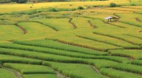 Feld im Tal Chiang Mai Thailand Stockbilder