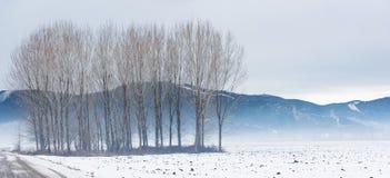 Feld im Winter Stockfotografie